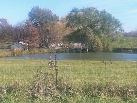 trees pond