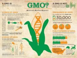 gmo-genetically-modified-organism_50290d5e92a11_w1500